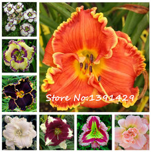 100 Pcs 24 Color Italian Daylily Flowers Seed, Rare Unique Hemerocallis Seeds, Hybrid Day lily Sementes  Balcony Garden Planting