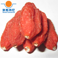free shipping Chinese herb tea dried ningxia organic goji berry crop tea&wolfberry fruit&dried medlar tea
