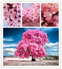 Japanese Sakura Seeds Bonsai Flower Cherry Blossoms Cherry Tree Ornamental Plant 20 Particles / lot(China)