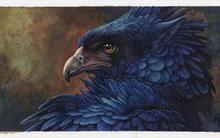 artwork birds hawk eyes eagle 4 Sizes Home Decoration Canvas Poster Print