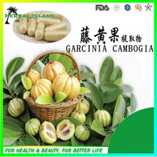 GMP certified lose weight garcinia cambogia extract capsules 500mg*100pcs/Bag