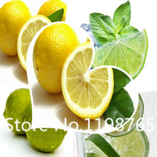 Free Shipping Freedom Planting Potted Italy Crystal Lemon seeds fruit Seeds 50 Piece