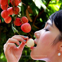 Succulent Plants Lychee Lychy Litchi Seeds, Leechee Fruit Tree Seeds For Home Garden Backyard - 10 Particles