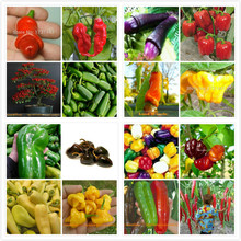 800 seeds / 1pack 16 kinds of rare Pepper peter chilli giant Seeds Vegetable DIY Growing Trouble for Home & Garden Planting