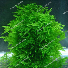 1bag a 200pcs Rare Aquarium Planten Java Moss Grass Seed Raros Aquario Fish Tank  Aquatic Plant Seeds Home & Garden Gifts Plants