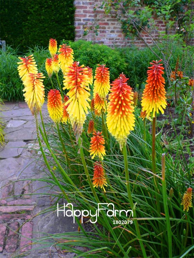 полевые цветы и солнце фото