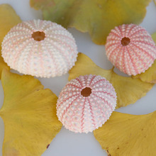 Free Shipping(10pcs/lot)Natural Small Pink Sea Urchin Natural Shell Conch Beach Wedding Decoration Coastal Home Decoration