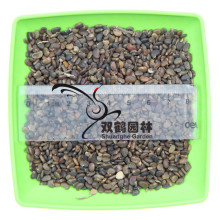 Sale of new mining japonica seed - japonica net seed - Seeds of large particles full of new seeds Cong 200g/lot