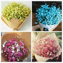Marseed 100 pcs Rare Flower Plant Pot Multi Color Gypsophila Flower Bonsai for Gardening Decoration Indoor Bonsai Plants MAS010(China)