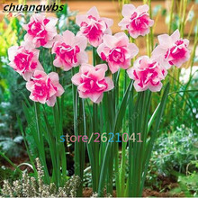 100pcs daffodil flower,daffodil seeds(not daffodil bulbs)bonsai flower seeds aquatic plants double petals Narcissus garden plant(China)