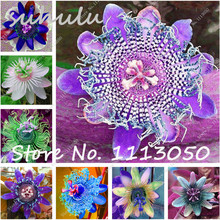 Passion Flower (Passiflora Incarnata), 100Pcs Ornamental Plants Bonsai Seeds, True Native Seed Plant for Home & Garden