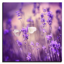 Modern Oil Painting Modular Frameless Canvas Print Home Decoration Beautiful Flower Lavender Art Charm Picture for Room Wall(China)