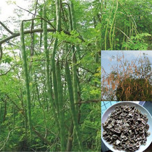 30Pcs Chinese Moringa Seeds DIY Home Garden Plant Bonsai Plants Outdoor Farmer Food Tree Seed Drop Shipping(China)