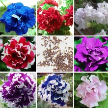 8 species Petunia Seeds Petunias Garden Bonsai Balcony Petunia hybrida Flower Seed A pack 200 pieces(China)