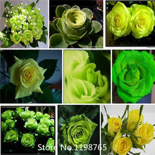 2016 Hot (THIS ORDER INCLUDE 9 PACKS EACH COLOR 100 SEEDS)CHINESE ROSE SEEDS - Rainbow Pink Black White Red Purple Green Blue Ro