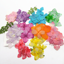 120pcs Free Shipping Pressed flower dried flower Natural flowers DIY materials Hydrangea sale 1lot / 120pcs