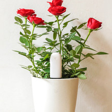 International Version Xiaomi Mi Flora Flower Monitor Bluetooth Connection Flower Care  Smart Soil Water Tester  App Control
