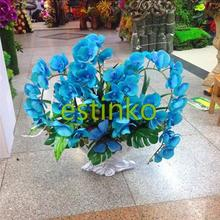 20pcs/lot Rare Orchid Bonsai Balcony Flower Butterfly Orchid Seeds Skyblue Moth Orchid Seeds Flower Home Garden DIY Bonsai Plant