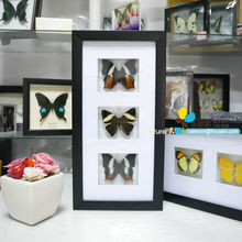FOUSEN(023) Preserved butterfly, insects, flowers and seashells PS shadow box framed naturals(China)