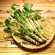 200pcs/lot Wasabi Seeds, Japanese Horseradish Seed Vegetable for planting easy to grow Bonsai Plant DIY Home Garden Plants