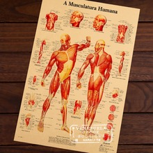 Map of Human Body Muscular System Classic Vintage Retro Kraft Decorative Poster Maps Home Bar Posters Wall Sticker Decor