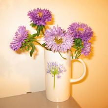 Hot Selling Rare Light Purple Callistephus Chinensis Flower Seeds Balcony Potted Bonsai Plant Flower Aster Seeds 120PCS