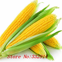 Hot Sale 20 8 kinds of corn Rare Seeds Sweet Corn Fresh Organic Heirloom Vegetable Seed Fruit Corn BLUE GIANT C STRAWBERRY POPCO(China)