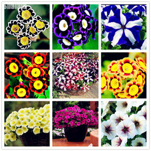 100Pcs Petunia Seeds,Perennial Peanuts Flowers Garden Sementes De Flores Jardin Beautiful Morning Glory Flower Seeds