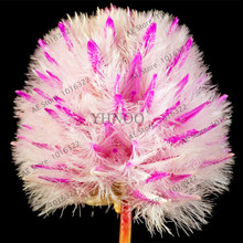 200PCS High import Rare Australia foxtail Seed. Garden, green on both sides of the road, Plant Grass Pretty Flowers Seeds