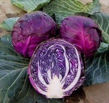 The more purple purple cabbage seeds vegetable 100seed