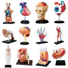 4D Assemble Blocks Human Body Zombie Skeleton Anatomy Skull Brain Torso Heart Anatomy Ear Model Puzzle Medical Science Doll Toys