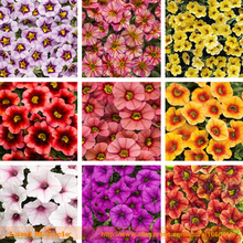 9 Colors Calibrachoa Organic Petunia Seed, 200 Seed/Pack, Mixed 'Garden Petunia' Very Beautiful Flower Seed-Land Miracle