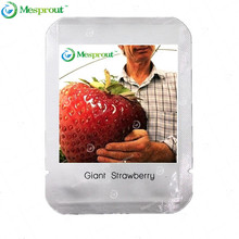 Rare Big Strawberry Seeds Nutritious Delicious Natural Sweet Fragaria Seed 100 Pieces / Lot Professional Packing