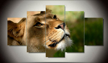 2017 Time Limited Lion Painting on canvas Bedroom decoration picture wall art 5 pcs/set unframed Oil Prints Coloring by Numbers