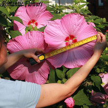 50 Particle/bag Giant Hibiscus Flower Seeds Hardy ,Mix Color, DIY Home Garden Potted Or Yard Flower Plant Free Shipping(China)