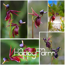 High Quality For Home & Garden Flying Duck Orchid Flower Seeds China Rare Flower Seeds Beautiful Orchids 200 seeds/bag,#SRMA82
