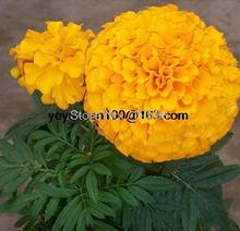Marigold flower potted flowers 100 flower seeds