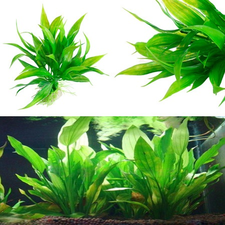 Hot Sale Artificial Grass 15cm Height Plastic Manmade Water Plant Green Grass For Aquarium Decoration