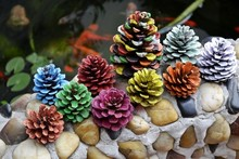 Handmade diy colored drawing pinecone flower hand drawing for natural pinecone dried flowers home decoration(China)
