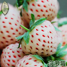 Pineapple Berry Edible White Strawberry 4 Seasons Sowing Garden Balcony Potted Fruits And Vegetables Seeds 100 Seeds