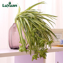 28 Heads Chlorophytum Simulated Grass Artificial Plants Home Decoration Fake Flowers Wall Decoration Free Shipping 4014(China)