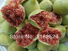New Direct Selling Outdoor Plants Regular Seeds Vegetables Dishes Sementes Ficus Carica - Fig Fruit Tree Seeds 100 Finest