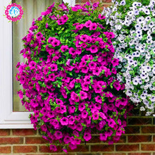 100pcs/bag rare petunia bonsai flower seeds, 20 colors any choice, suitable for home & garden planting plant seeds free shipping(China)