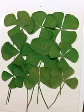 Press flower dried flowerFour Leaf Clover  sale 1 lot/10 bags free shipment