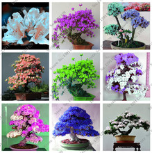 100 pcs / bag Rare Bonsai 13 varieties of azalea DIY home and garden seed plants of Japanese Sakura flowers