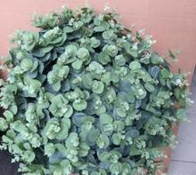 artificial leaves eucalyptus green branches plants floristry accessories money leaves decoration for home(China)