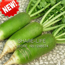 50 pcs / bag Green Radish Seeds Are Very Tasty Nutrition Healthy Gourmet Vegetable Seeds Best Quality Radish Seeds(China)