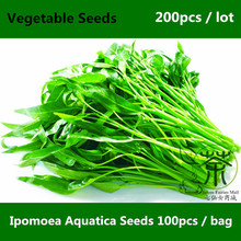 Prompt Shipment Chinese Ipomoea Seeds 200pcs, Very Efficient Kang Kong Vegetable Seeds, Ipomoea Forsk Seeds Highly Recommendable(China)