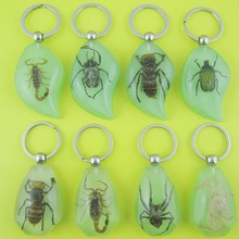 Color Random Real Green Beetle Lucid Keyring Keychain Insect Jewelry Gift For Men And Women(China)