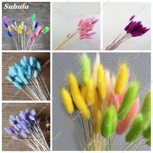 Rabbit / Bunny Tail Grass Seed Beautiful Flower Seed Multi Color Bonsai Dried Herb Flower Indoor Office Decoration Seed 100 Pcs(China)